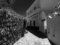 Panarea, Isole Eolie, Sicilia, Italy (ArtistBlood) Tags: italy sicilia panarea isoleeolie travelpanasonicgx7olympus1240mmf28