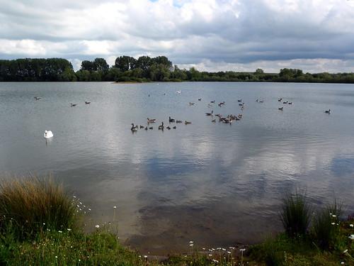 Godmanchester to St Ives 274: Island Lake, Godmanchester Nature Reserve