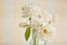 Happy Christmas! (borealnz) Tags: roses iceberg flowers white arranged pretty bottle soft delicate