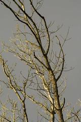 20170104-_IMG1015-Edit (fleetingphotons) Tags: pentaxk1 smcpentaxa200mmf28ed wasingestate fishing warrenbeat kennet trees