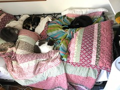 12/17 - Naptime with Cats (pipilo) Tags: susan jazzy snickers mica emmi p16home p16pets pets