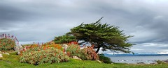 Monterey Bay Panorama with Cypress (GeminEye27) Tags: seascape sea ocean pacificgrove montereybay montereypeninsula storm clouds