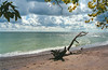 1985-09-00 Kanada (120) Lake Erie (Scan vom Negativ) (mike.bulter) Tags: baumstamm beach can canada cloud clouds eriesee kanada lakeerie stamm strand treetrunk wolke wolken