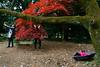 People Today (Tavepong Pratoomwong) Tags: tree women red pink people today go green selfie umbrella tokyo japan tavepong street streetphoto unposed shinjuku