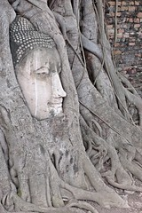 Ayutthaya - Wat Mahathat - Buddha Head Surrounded by Tree Roots (zorro1945) Tags: buddhaimage buddhahead buddha buddhism tree roots watmahathat ayutthaya thailand asia temple wat buddhisttemple ruins ruinedtemple history 1374