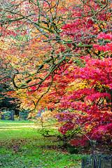 20161022-_DSC3578-1-1 (WiltsJambo) Tags: leaves places westburysurrounding westonbirt