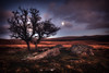 Dartmoor Dusk (Nickerzzzzz - Thanks for stopping by :)) Tags: ahappynewyearfrom ©nickudy nickerzzzzz theartofphotography canoneos5dmarkiii ef1635mmf4lisusm sunset dusk moon dartmoor barnhillrocks granite tree clouds sky landscape