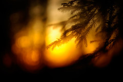 _IGP3253_web (Erik Koffmar) Tags: winterlight light sunset sunrays rays lastlight firtree fir sweden macro meyergörlitz meyer m42 goldenlight golden görlitz koffmar k10d uppsala uppland outdoor sunshine doubleexposure siluette winter tree wood woods forest evening mood moody 135mm orestor orrestor vintagelens vintage sverige yellow orange