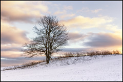 lonely in the frost (herbert thomas hesse) Tags: bäume deutschland eos700d forest hth56 landscape landschaft thomashesse thüringen winter