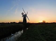 Morning Worship (mr_snipsnap) Tags: norfolkbroads water bird cormorant swans broadland windmill sunrise nature fauna wildlife