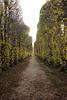 // Jersbek / Barockgarten (daniela.eggers) Tags: jersbek barockgarten schleswig holstein allee herbst baum weg park