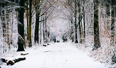 Promenade dans les bois (quentin.spitaels) Tags: promenade walk nature forest forêt woods snow neige winter hiver cold froid arbres trees belgium belgique wallonie wallonia namur malonne fuji fujixt1 fujifilm qsphotography