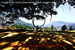 MAGESTIC-TREE-with-filtered-light-Play of light and shade (prem swaroop) Tags: banyantree asia nationaltree india araku arakupicturepostcard wintercapital aptourism travelindia discoverindia destination landscape trees shade travellerstree