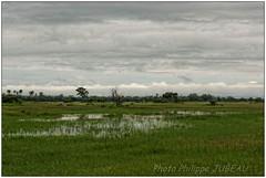 DSC08644PJ_resultat (http://phj.bookfoto.com/) Tags: botswana philippe jubeau afrique delta okavango