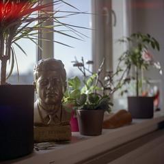 JFK. Wrocław, Poland. (wojszyca) Tags: yashica mat 124g tlr 6x6 120 mediumformat fuji pro 160c gossen lunaprosbc epson v800 jfk president sculpture head interior morning flowers