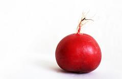 one radish (Rosmarie Voegtli) Tags: radieschen radish vegetable red one white inexplore