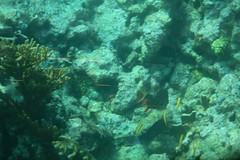 35. John Pennekamp coral reef (Misty Garrick) Tags: johnpennekamp johnpennekampreef johnpennekampcoralreefstatepark coralreef florida keylargofl keylargo floridakeys atlanticocean