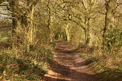 The shadow of Winter and the soft warmth of Spring (JP Photography74) Tags: footpath earlyspring walking trees sun outdoors nature wood uk england staffs acton shadows absolutelystunningscapes