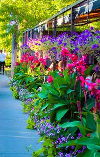 Flowers @ Arundel avenue - Explored