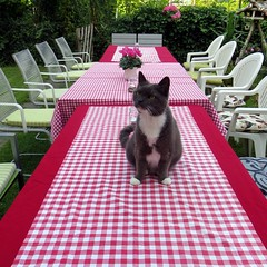 waiting-for-the-party (Frizztext) Tags: party cat garden table frizztext