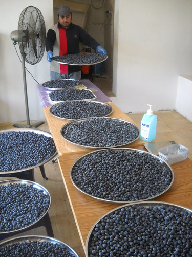 Blueberries at cooling stage b Jun 1, 2015