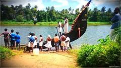 DSC_1690 (|| Nellickal Palliyodam ||) Tags: india race boat snake kerala krishna aranmula avittam parthasarathy vallamkali palliyodam malakkara nellickal jalothsavam