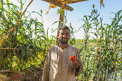 Linking Smallholder Farmers to Global Markets (usaidegypt) Tags: world poverty usa usaid green project us education support farmers market farm egypt peaceful health agency future infrastructure government farms farmer agriculture luxor development export efforts cooperative governance smallholder exportsmarkets