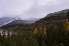 The Meeting of Seasons (gwendolyn.allsop) Tags: autumn trees snow clouds golden cloudy pnw leavenworth d5200
