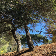 Santa Cruz (Craw Modern) Tags: california santacruz square lookingup phonephoto allrightsreserved iphone6