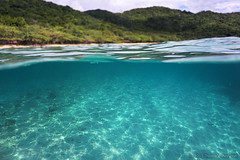 Culebra, Puerto Rico (Thomas Shahan 3) Tags: november fish nature sunshine coral outdoors island cool underwater puertorico turquoise carribean snorkeling clean culebra tropical fans clearwater
