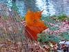 Τρικαλα Ελλαδα P1150653 (omirou56) Tags: nature river leaf natur hellas greece 43 trikala thessalia ελλαδα φυση νερο ποταμι ελλασ ευρωπη τρικαλα φθινοπωρο φυλλα panasoniclumixdmctz40 εποχη