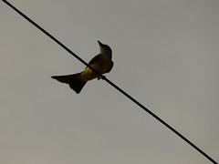 (Sofía Orellano) Tags: bird birds mine argentina sanjuan panasonic lumix nature natural naturaleza natura ave pajaros sky color colores colors