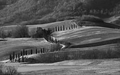 Tuscany, landscape (annalom87) Tags: tuscany countryside cypresses italy