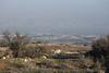 Gilboa - Mt. Barkan Lookout