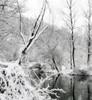 Filigree winter landscape (Sappho et amicae) Tags: landscape forest river sapphoetamicae željkagavrilović canon450d reflection