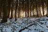 Sonnenuntergang im Winterwald II (JBsLightAndShadow) Tags: heidelberg nikon nikond750 d750 tamron tamronsp2470mmf28divcusd winter winter2017 schnee snow wald odenwald forest baum tree bäume trees gaisberg sonne sonnenschein sun sonnig sunny sunshine sunset sonnenuntergang licht sonnenlicht