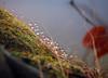 water droplets on mossy tree stump 1 (bob the lomond) Tags: bobthelomond scotland gartocharn lochlomond