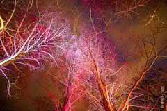 Farbverzweigung (WiSch | Foto) Tags: winterlichter mannheim nachtaufnahme langzeitbelichtung luisenpark orte städte badenwürttemberg deutschland de
