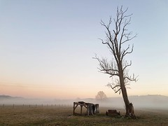 Bye Bye 2016 (Ben Heine) Tags: enter new tag tags displayed publiclynature benheinephotography photography tree landscape 2016 beauty fog mist cold belgium belgique rochefort wallonie wallonia arbre dead
