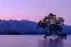The Lone Tree .  Wanaka (RonographyHK) Tags: lonetree wanaka newzealand 2016 lake