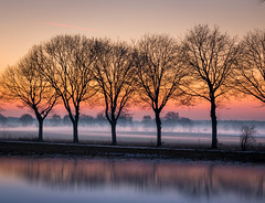 Januarnebel (Christian Wilmes) Tags: nebel fog bäume trees farben colours sunset sonnenuntergang spiegelung reflection mist