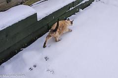 Snow Cat (M C Smith) Tags: cat snow prints green white