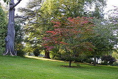 Dudmaston Hall, Quatt, Shropshire 16/10/2016 (Gary S. Crutchley) Tags: dudmaston hall shropshire uk great britain england united kingdom nikon d800 history heritage nikkor afs 28300mm f3556g ed vr nt national trust garden