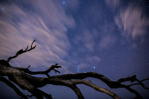 driftwood beach starry night