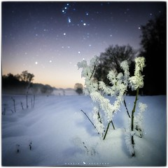 Frozen Orion (MartinFechtner-Photography) Tags: germany deutschland grafschaftbentheim uelsen gölenkamp stars sterne spöllberg hünengrab schnee snow orion milkyway milchstrase perseusarm frozen gefroren landschaft landscape nightscape winter constellation sternbild