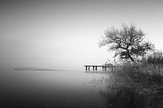Die Eiche am See