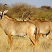 DSC09760 - NAMIBIA 2013