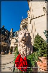 Biltmore Estate 2016-11-04 (David Simchock Photography) Tags: asheville biltmoreestate biltmorehouse christmas davidsimchockphotography dijoncreativesolutions meetup nc vpw vagabondphotowalks holiday image photo photograph red redribbon ribbon sculpture