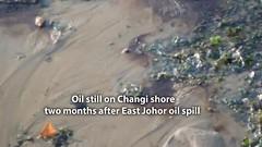 Oil and sheen still seen on Changi (wildsingapore) Tags: changi safchalets threats oil spill pollution singapore marine intertidal shore seashore marinelife nature wildlife underwater wildsingapore