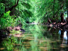 Enchanted river stream (Zacatecas, Mexico) (josebañuelos) Tags: river stream reflections trees water zacatecas arroyo